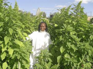 prof Abukutsa-Onyango